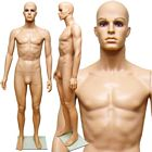 Plastic Realistic Head Male Full Size Mannequin with Removable Head